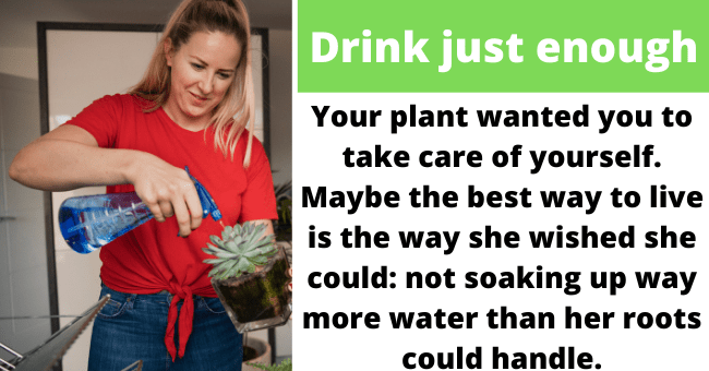 Funny ways to honor your houseplant's memory | thumbnail text -