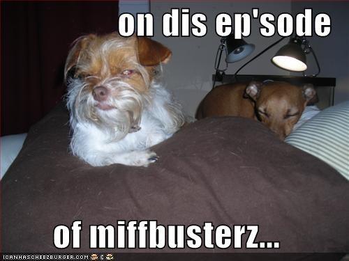 dachshund jamie hyneman lookalike mustache mythbusters TV whatbreed - 1418935040