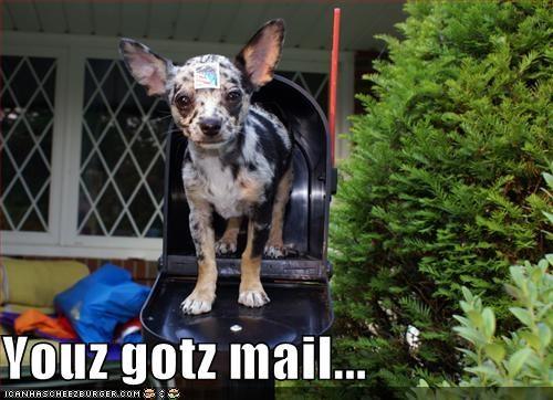 chihuahua mail mailbox stamp - 1419427072