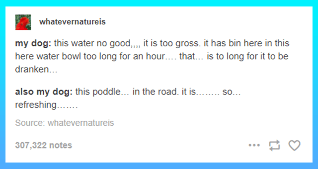collection of funny tumblr dog posts   thumbnail includes one tumblr post 'Font - whatevernatureis my dog: this water no good,, it is too gross. it has bin here in this here water bowl too long for an hour... that... is to long for it to be dranken.. also my dog: this poddle... in the road. it is.. so. refreshing. Source: whatevernatureis 307,322 notes ...'