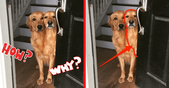 Dog Optical Illusions Which Don't Appear Right At First Glance| thumbnail text - Dog, what, why