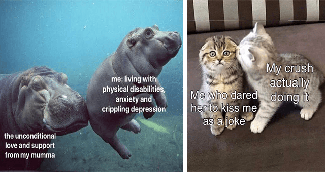 collection of wholesome animal memes | thumbnail includes two memes including a hippo nudging a baby hippo's butt 'Water - me: living with physical disabilities, anxiety and crippling depression the unconditional love and support from my mumma' and a kitten kissing another kitten 'Cat - My crush actually Me who dared doing it her to kiss me as a joke'