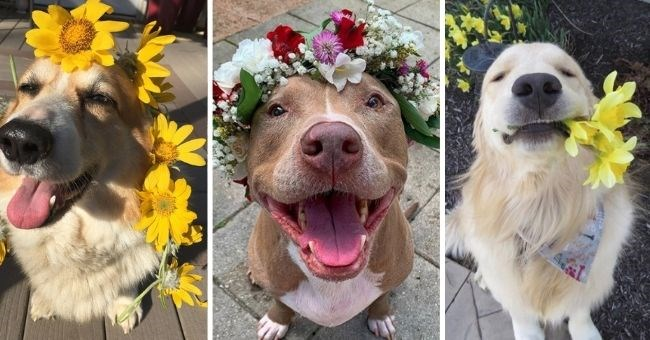 wholesome pictures of dogs who love flowers