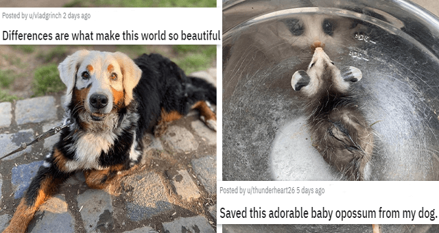 pics and vids of the cutest animals of the week | thumbnail includes two pictures one of a strangely colored dog 'Differences are what make this world so beautiful u/vladgrinch' and another of a possum in a bowl 'Saved this adorable baby opossum from my dog. Look at that face! u/thunderheart26'