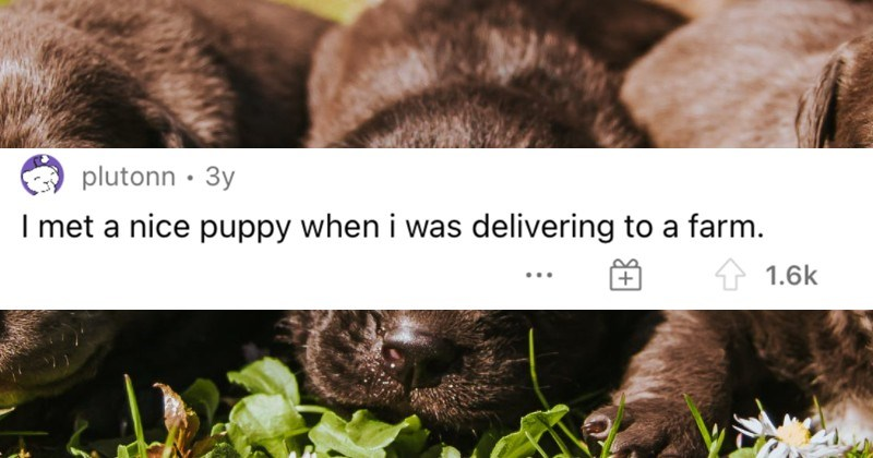 A collection of the most ridiculous experiences had by delivery drivers.