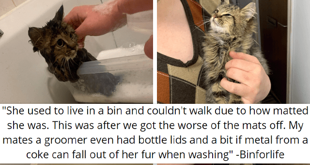 viral imgur thread about a person rescuing a dirty trashcan kitten | thumbnail includes two pictures including a man holding a happy kitten and a kitten with matter hair in a tub 'She used to live in a bin and couldn't walk due to how matted she was. This was after we got the worse of the mats off, my mates a groomer. Even had bottle lids and a bit if metal from a coke can fall out of her fur when washing Binforlife'