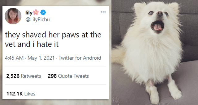 collection of tweets about dogs | thumbnail includes a picture of a fluffy white dog with its ankles shaved and a tweet 'Dog - lily @LilyPichu ... they shaved her paws at the vet and i hate it 4:45 AM - May 1, 2021 - Twitter for Android 2,526 Retweets 298 Quote Tweets 112.1K Likes'