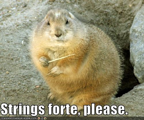 conduction groundhog instrument lolgroundhog lolgroundhogs please strings - 1421823744