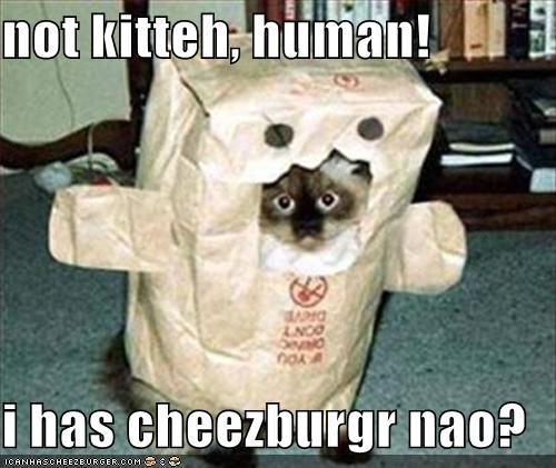 Cheezburger Image 1422159616
