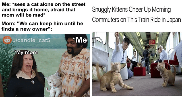 "collection of wholesome kitten memes | thumbnail includes two memes including a woman winking 'Hairstyle - Me: *sees a cat alone on the street and brings it home, afraid that mom will be mad* Mom: ""We can keep him until he finds a ne w owner"": ulcandle_cat5 *Me *My mom' and kittens on a subway 'Carnivore - Snuggly Kittens Cheer Up Morning Commuters on This Train Ride in Japan'"