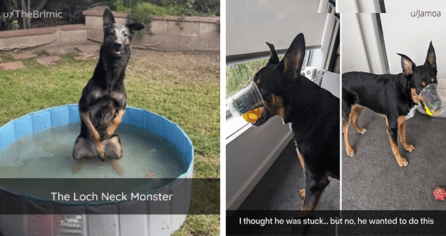 collection of wholesome dog Snapchats | thumbnail includes two snaps including a dog in a small pool 'Plant - u/TheBrimic The Loch Neck Monster Toote' and a dog with its nose in a cup 'Dog - u/Jamoa I thought he was stuck... but no, he wanted to do this'