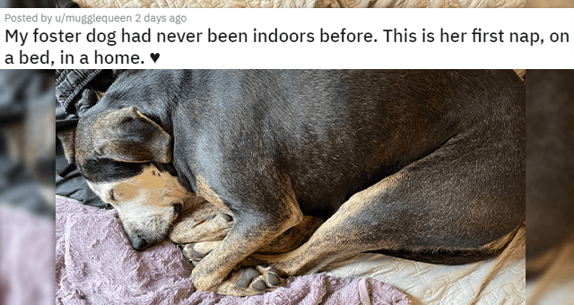 posts of animals newly adopted this week | thumbnail includes a picture of a dog sleeping 'My foster dog had never been indoors before. This is her first nap, on a bed, in a home. u/mugglequeen'