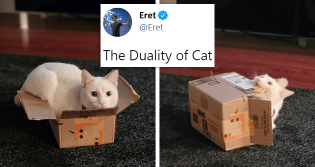 This week's collection of cat tweets | thumbnail includes two pictures including a cat in a box and a cat falling out of a box 'Vertebrate - Eret ... @Eret The Duality of Cat 11:47 PM · May 4, 2021 - Twitter for Android 2,714 Retweets 69 Quote Tweets 90.1K Likes'
