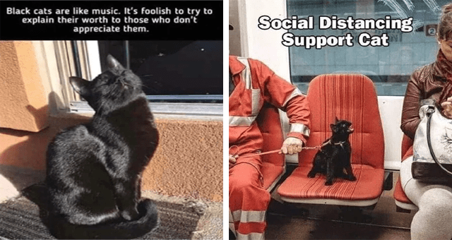 collection of black cat memes | thumbnail includes two memes including a cat on the subway 'Chair - Social Distancing Şupport Cat 2.' and a black cat in the sun 'Cat - Black cats are like music s foolish try explain their worth those who don't appreciate them.'