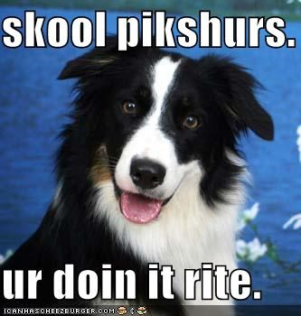 border collie doin it rite school - 1425037056