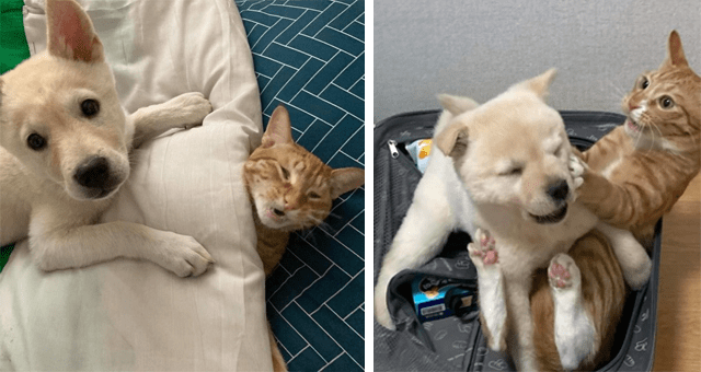 viral thread of a cat and dog being friends | thumbnail includes two pictures of a cat and a puppy playfully fighting