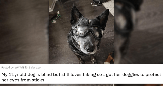 pics and vids of the cutest animals of the week | thumbnail includes a picture of a blind dog wearing goggles 'My 11yr old dog is blind but still loves hiking so I got her doggles to protect her eyes from sticks u/WildBill-'