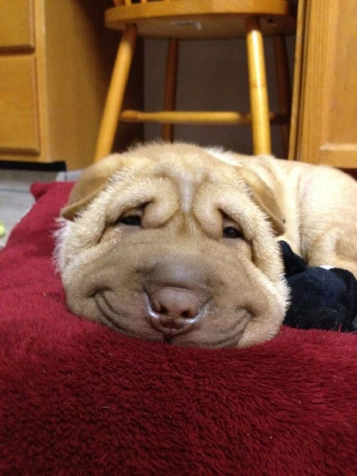 collection of pictures of dogs smiling | thumbnail two pictures of dogs smiling