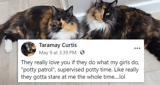 "Facebook comments about cats loving their humans | thumbnail includes a picture of two cats and one Facebook comment 'Cat - Top Fan Taramay Curtis They really love you if they do what my girls do, ""potty patrol"", supervised potty time. Like really they gotta stare at me the whole time..lol OD 15'"
