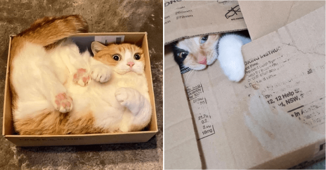 list of 15 cat in box images | thumbnail two pictures of cats in boxes