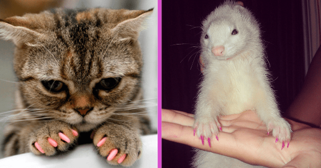 Pets Who Rocked Some Purr-fectly Painted Nails| thumbnail text - cat, ferret, painted nails