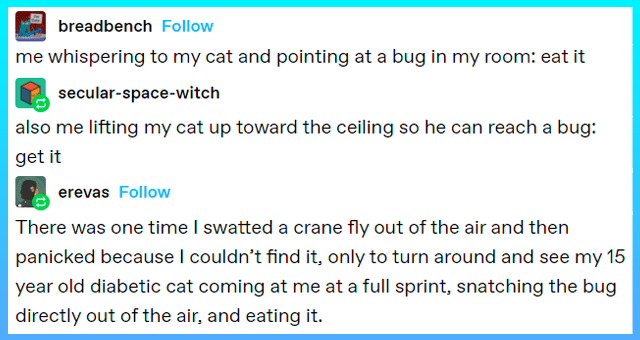 tumblr posts about cats versus bugs | thumbnail includes a tumblr thread 'Font - breadbench Follow me whispering to my cat and pointing at a bug in my room: eat it secular-space-witch also me lifting my cat up toward the ceiling so he can reach a bug: get it 221,254 notes Rectangle - erevas Follow There was one time I swatted a crane fly out of the air and then panicked because l couldn't find it, only to turn around and see my 15 year old diabetic cat coming at me at a full sprint, snatching t'