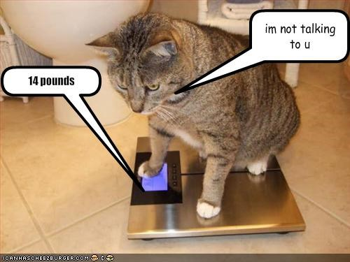 diet,fat,lolcats,pounds,Sad,scale