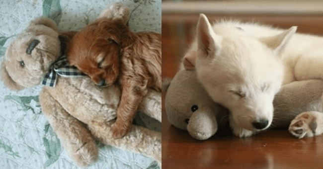 list of sleeping puppies | thumbnail is two images of sleeping puppies side by side