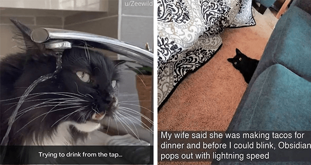 collection of cat Snapchats | thumbnail includes two snaps including a cat peeking out from under a couch 'Cat - My wife said she was making tacos for dinner and before I could blink, Obsidian pops out with lightning speed' and a cat with its head in the faucet 'Cat - u/Zeewild Trying to drink from the tap...'