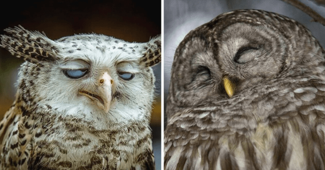 List of Silly Owl Pictures | Thumbnail is two pictures of owls side by side