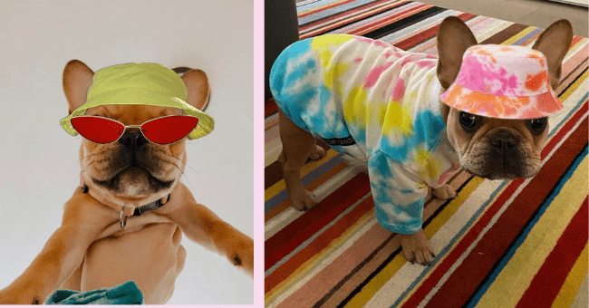 Frenchie Is Never Spotted Without Her Signature Accessory, A Bucket Hat (Photo Shopped)| thumbnail text - frenchie, glasses, hat