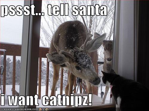 catnip christmas lolcats loldeer psst santa - 1427835136