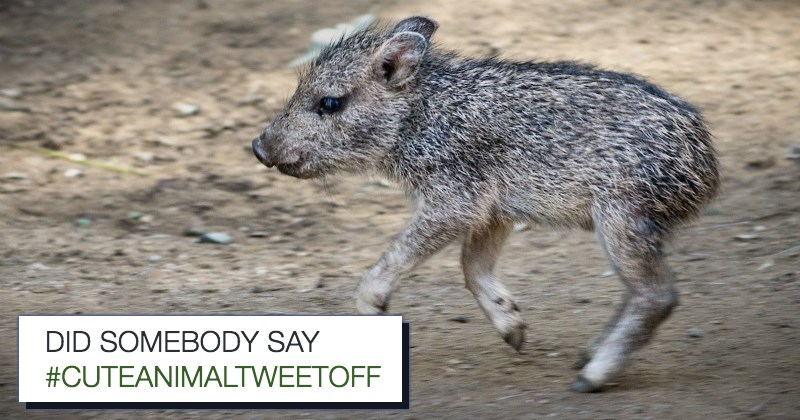 list zoo cute animals - 1427973