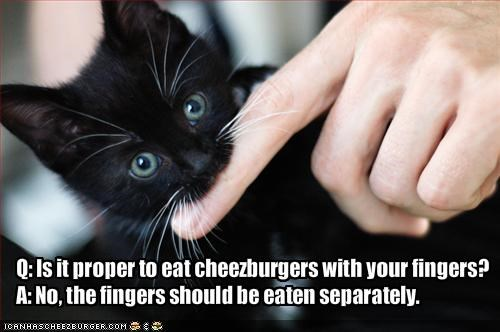 cheezburger kitten nom nom nom
