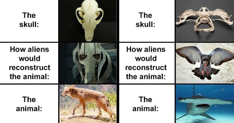 funny memes about animals and how aliens would reconstruct them based on their skulls and skeletons