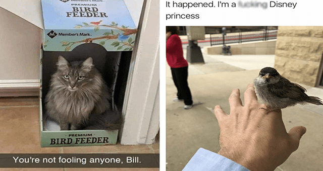 list of funny and fresh animal memes | thumbnail includes two memes including a cat sitting in a bird feeder 'Cat - Memers Mark PREMIUM BIRD FEEDER Member's Mark. PREMIUM· BIRD FEEDER You're not fooling anyone, Bill.' and a bird sitting on a man's hand 'Bird - It happened. I'm a fucking Disney princess'