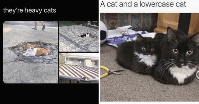 """Series of 12 Cat memes 