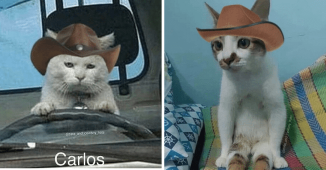 """13 Picture Series of Cats in Hats 