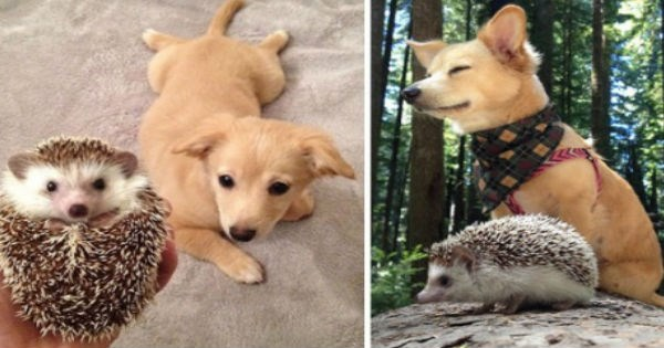 dogs pets growing up friends cute Then And Now Cats animals - 1431045
