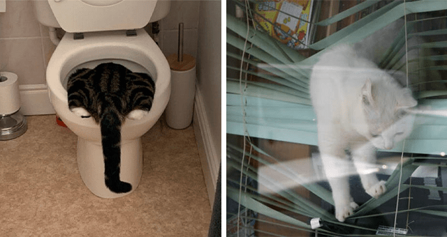pictures of cats being ridiculous | thumbnail includes two pictures including a cat in a toilet and a cat stuck in window blinds