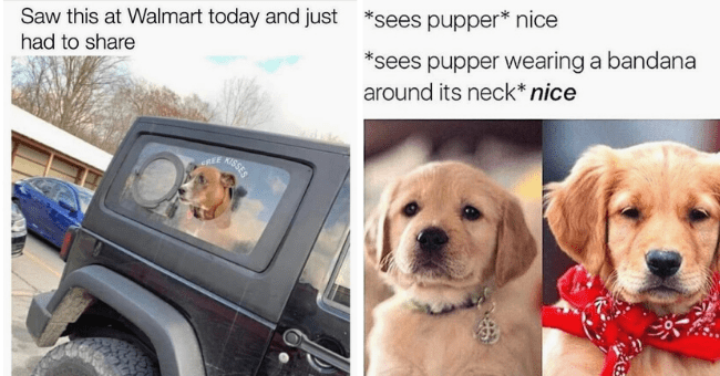 List of 12 Dog memes | thumbnail right pic dog meme with head out of car offering free kisses, thumbnail right pic two dogs meme one without bandana one with
