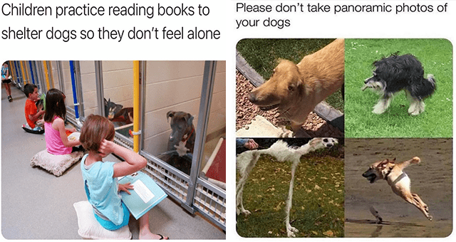 this week's collection of dog memes | thumbnail includes two memes including kids reading to dogs 'Product - Children practice reading books to shelter dogs so they don't feel alone' and panoramic pictures of dogs 'Dog - Please don't take panoramic photos of your dogs'