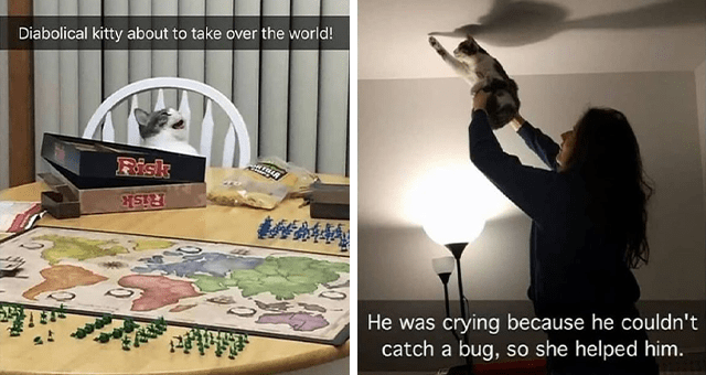collection of cat Snapchats | thumbnail includes two snaps including a cat laughing at a table 'Table - Diabolical kitty about to take over the world! Risk 轉 Risk' and someone raising a cat to the ceiling 'Hand - He was crying because he couldn't catch a bug, so she helped him.'