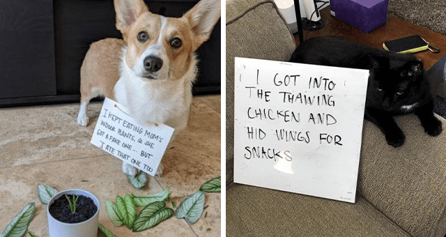 fresh collection of pet shames | thumbnail includes a picture of a cat with a sign '' and a dog with a fake plant and a sign ''