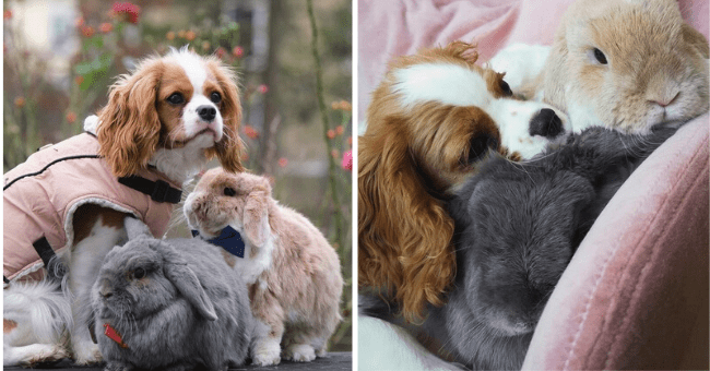 list of 16 family pictures of dog and two rabbits | thumbnail left pic dog and two rabbits standing together, thumbnail right pic dog and two rabbits cuddling