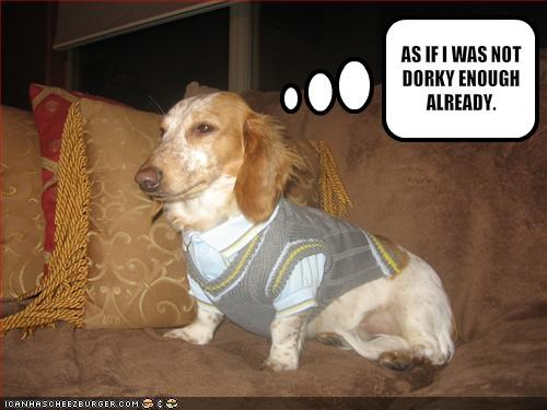 clothing,couch,dachshund,dork,FAIL,nerd,sweater