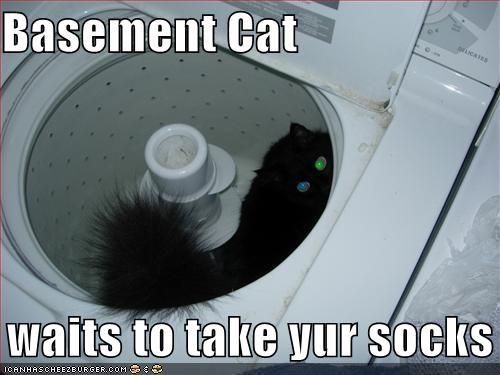basement cat dryer laundry lolcats socks stealing - 1433124096