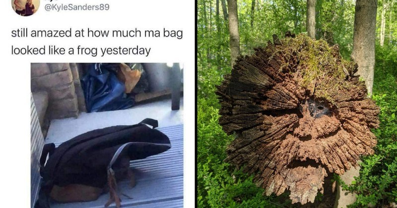 inanimate objects that look like other things