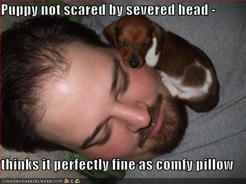 Puppy not scared by severed head