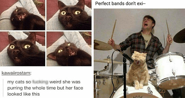 Caturday cat memes | thumbnail includes two memes including a cat looking confused 'Cat - kawaiirostam: my cats so fucking weird she was purring the whole time but her face looked like this See what's trending at FUNSubstance.com' and a cat looking like it's a singer in a band 'Musical instrument - Perfect bands don't exi--'